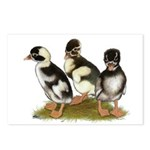 Emery Penciled Runner Ducklin Postcards (Package o