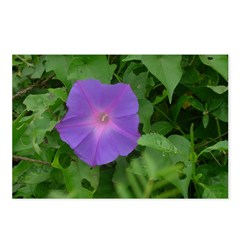 Morning Glory Postcards (Package of 8)