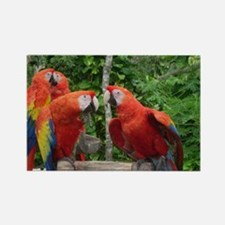 Scarlet Macaws Rectangle Magnet