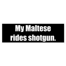 My Maltese rides shotgun (Bumper Sticker)