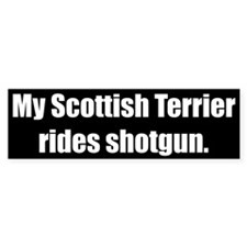 My Scottish Terrier rides shotgun (Bumper Sticker)