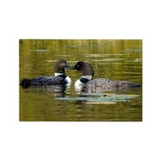 Loon framed print 12x9 Magnets