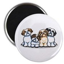 Four Shih Tzus Magnet