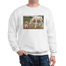 Cream Companions Sweatshirt