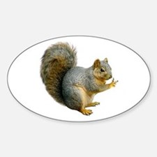 Peace Squirrel Decal