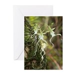 Ghost Orchid Greeting Cards (Pk of 10)