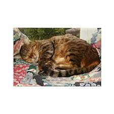 Benny sleeping Rectangle Magnet