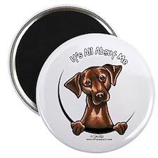 "Chocolate Lab IAAM 2.25"" Magnet (10 pack)"