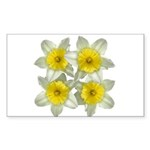 White daffodils Sticker (Rectangle 50 pk)