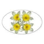White daffodils Sticker (Oval 10 pk)