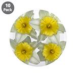 White daffodils 3.5