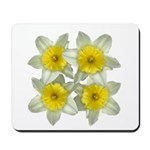 White daffodils Mousepad
