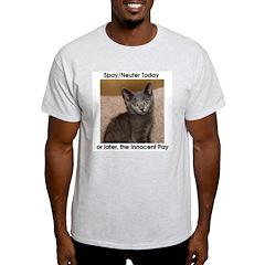 Innocent Cats Ash Grey T-Shirt
