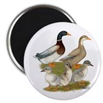 """Saxony Duck Family 2.25"""" Magnet (10 pack)"""