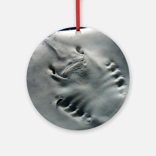 Stingray Ornament (Round)