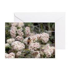 Buckwheat Bee Greeting Card
