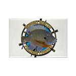 Bluegill Master Rectangle Magnet (100 pack)