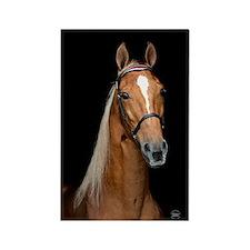 Sorrel Horse Rectangle Magnet