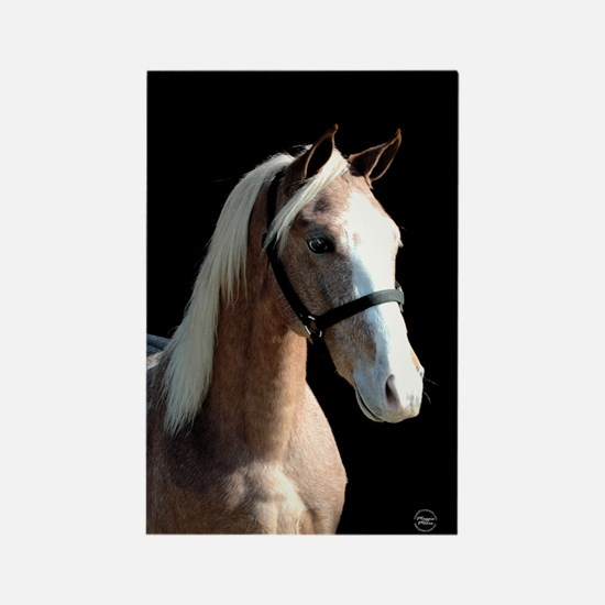 Red Roan Dun Horse Rectangle Magnet