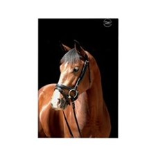 Bay Mare Rectangle Magnet