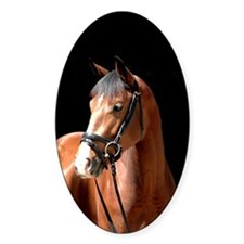 Bay Mare Decal
