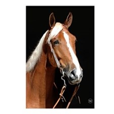 Chestnut Horse Postcards (Package of 8)