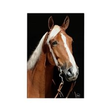 Chestnut Horse Rectangle Magnet