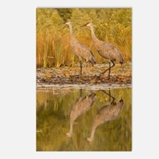 Sandhill Crane Postcards (Package of 8)