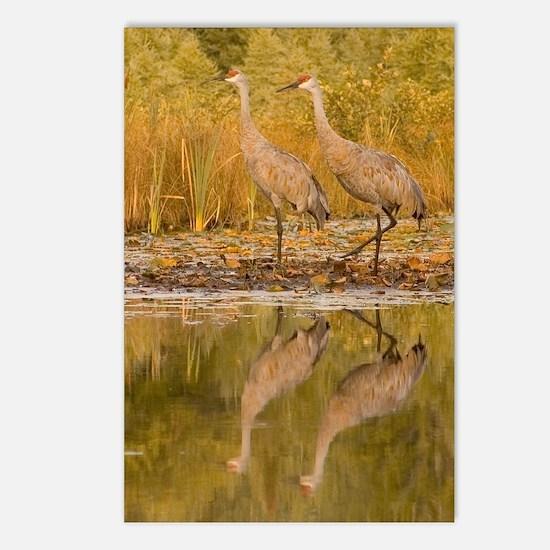 Sandhill Crane Postcards (Package of 8)