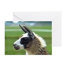 Patchwork Brown Llama Greeting Cards (Pk of 20)