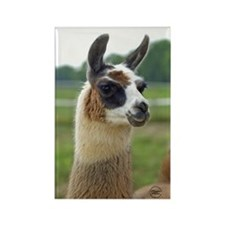 Spotted Llama Rectangle Magnet