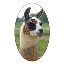 Spotted Llama Decal