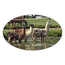 Llamas in a Pond Decal
