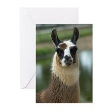 Brown and White Llama Greeting Cards (Pk of 10)