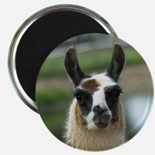Brown and White Llama Magnet