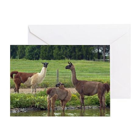 Llama Trio Greeting Card