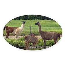 Llama Trio Decal