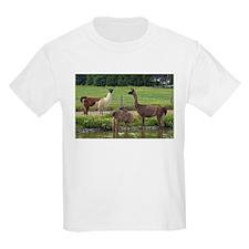 Llama Trio T-Shirt