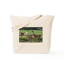 Llama Trio Tote Bag