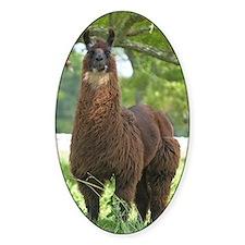 Black Llama Decal