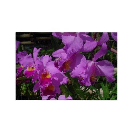Purple Orchid Rectangle Magnet