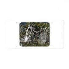 Spider webs 9R030D-012 Aluminum License Plate