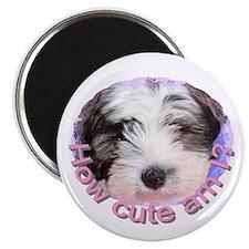 "Tibetan Terrier 2.25"" Magnet (10 pack)"