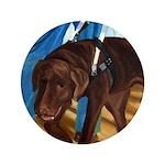 Guide Dog Jack - 3.5