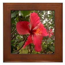 Red Hibiscus Framed Tile