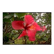 Red Hibiscus Postcards (Package of 8)