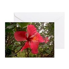 Red Hibiscus Greeting Cards (Pk of 10)