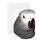 Congo African Grey Greeting Cards (Pk of 10)