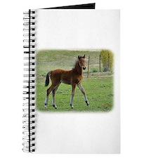 Foal 9P030D-197 Journal