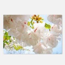 Tree Blossom Flowers Spring Postcards (Package of